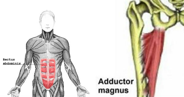 Rectus Abdominis & Adductor Magnus Affected By Sports Hernia