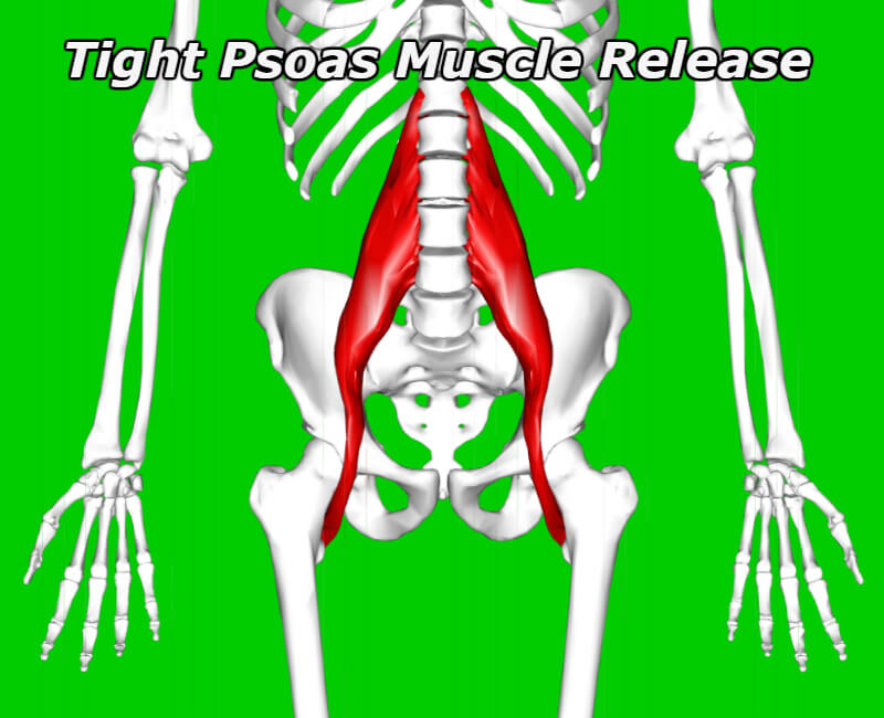 tight psoas muscle requiring release and massage to relieve tightness and inhibition