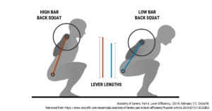 Shorter levers arms in low bar squat allow for more weight