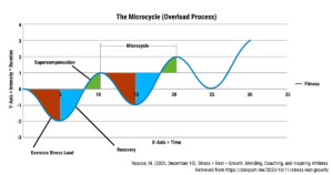 A graph showing that timing workouts may optimize supercompensation for muscle growth
